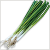 Bunching Onion